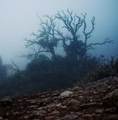 Old spooky tree in the morning — Stock Photo