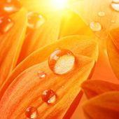 Turuncu çiçek yaprakları — Stok fotoğraf