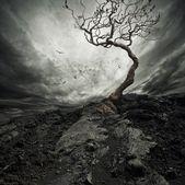 Cielo dramático sobre viejo árbol solitario. — Foto de Stock