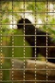 Animal in a zoo — Stock Photo