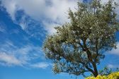 Tree over blue sky — Stock fotografie