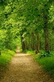 Beautiful path in forest — Stockfoto