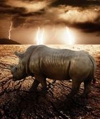 Rhino in a desert storm — Stock Photo