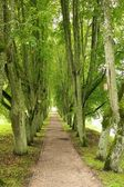 Beautiful tree alley — Stock Photo