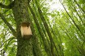 Starling-house on a tree in a forest. — Stock Photo