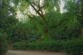 Piękny park — Zdjęcie stockowe
