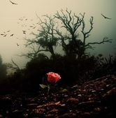Red rose growing through soil against spooky tree — Stockfoto
