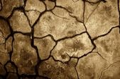 Dry cracked soil texture. — Stock Photo