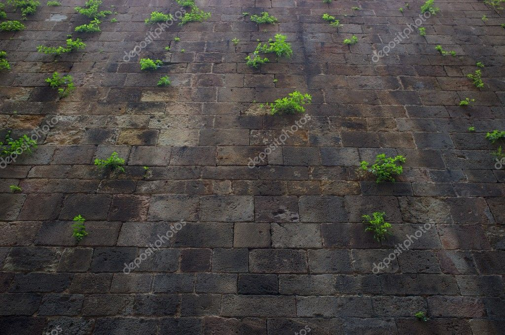 Old wall with green plants on it. — Stock Photo #10213358