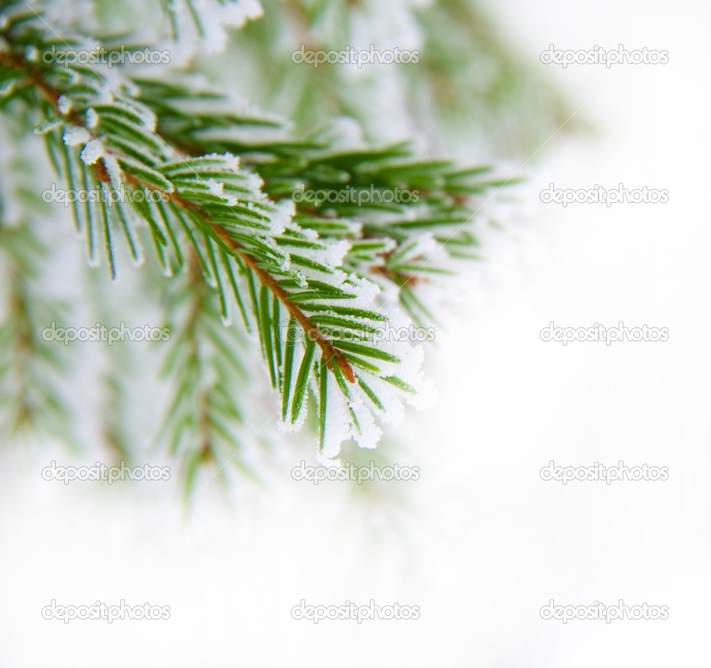 Pine twig — Stock Photo #10213685