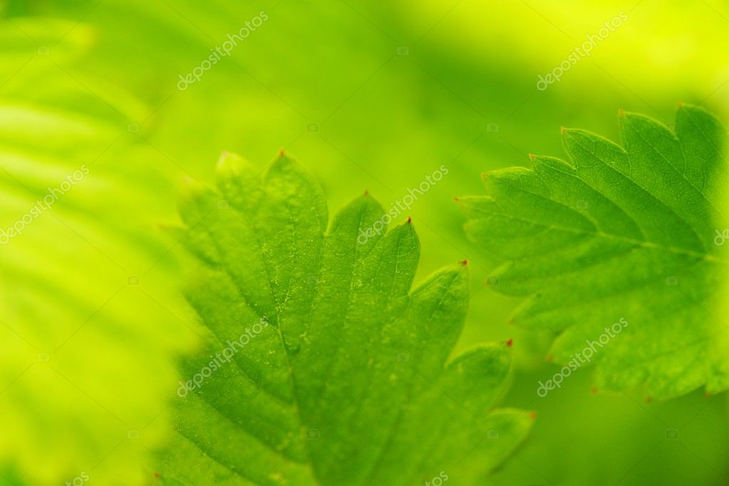 Green leaves close-up — Stock Photo #10213731