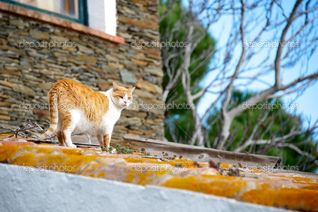 Cat on a roof. — Stock Photo #10214771