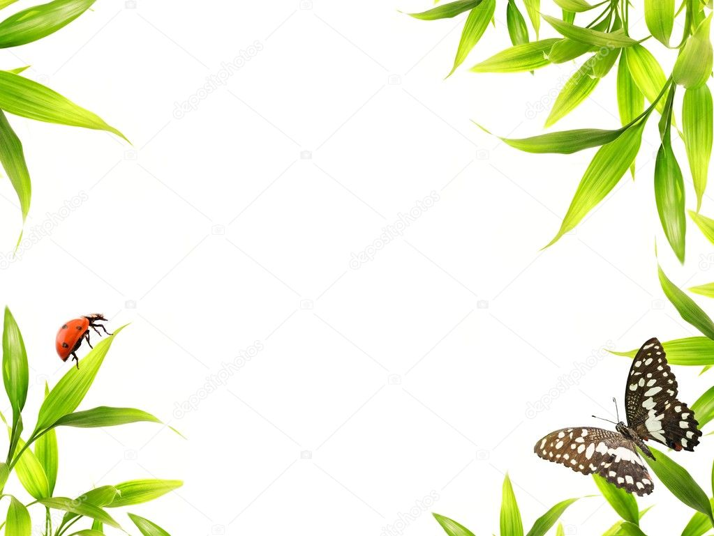 Ladybugs sitting on bamboo leaves — Stock Photo #10215450