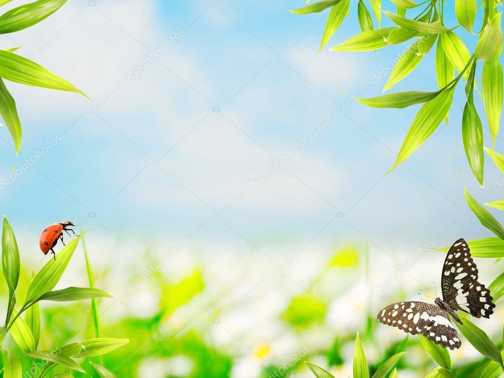 Ladybug sitting on bamboo leaves — Stock Photo #10215451