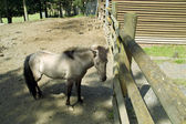 Gray horse behind a fence in a shelter — Stock Photo