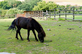 The black horse eats a grass in a shelter — Stock Photo