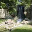 Brown bear at waterfalls — Stockfoto
