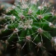 Royalty-Free Stock Photo: Cactus macro