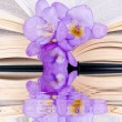 Stock Photo: Open book and freesia