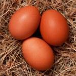 Eggs in nest — Stock Photo #10464227