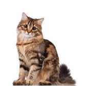 Sevimli kedi — Stok fotoğraf