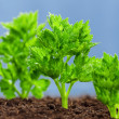 Stock Photo: Green seedling