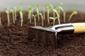 Green seedling — Stok fotoğraf