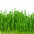Wheat grass — Stock Photo #8583042