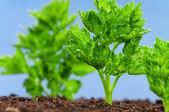 Sadzonka zielony — Zdjęcie stockowe