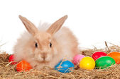 Rabbit with Easter eggs — Stock Photo