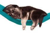 Şirin köpek yavrusu — Stok fotoğraf