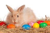 Rabbit with Easter eggs — Zdjęcie stockowe