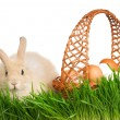 Rabbit in grass — Stock Photo