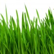 Stock Photo: Wheat grass