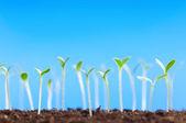 Green seedling — Stock Photo