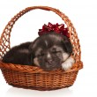 Cute puppy — Stock Photo