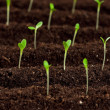 Green seedling — Stock Photo #9359031