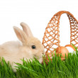 Rabbit in grass — Stock Photo #9360317