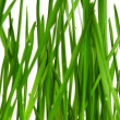Wheat grass — Stock Photo #9360570