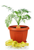 Carrot in plastic pot — Stock Photo