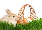 Rabbit in grass — Stock Photo