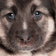 Stock Photo: Cute puppy
