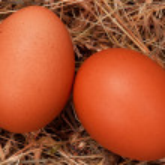 Eggs in nest — Stock Photo #9663348