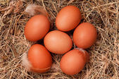 Eggs in nest — Stock fotografie