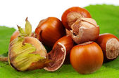 Hazelnut — Stock Photo