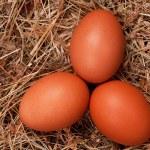 Eggs in nest — Stock Photo #9962300
