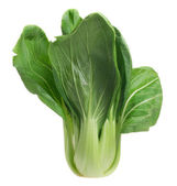 Pok Choi — Stock Photo