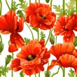Seamless pattern of red poppies realistic — ストックベクタ