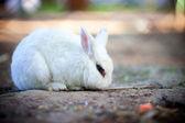 Rabbit. — Stock Photo