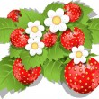 Strawberry bush — Stock Vector #10644398